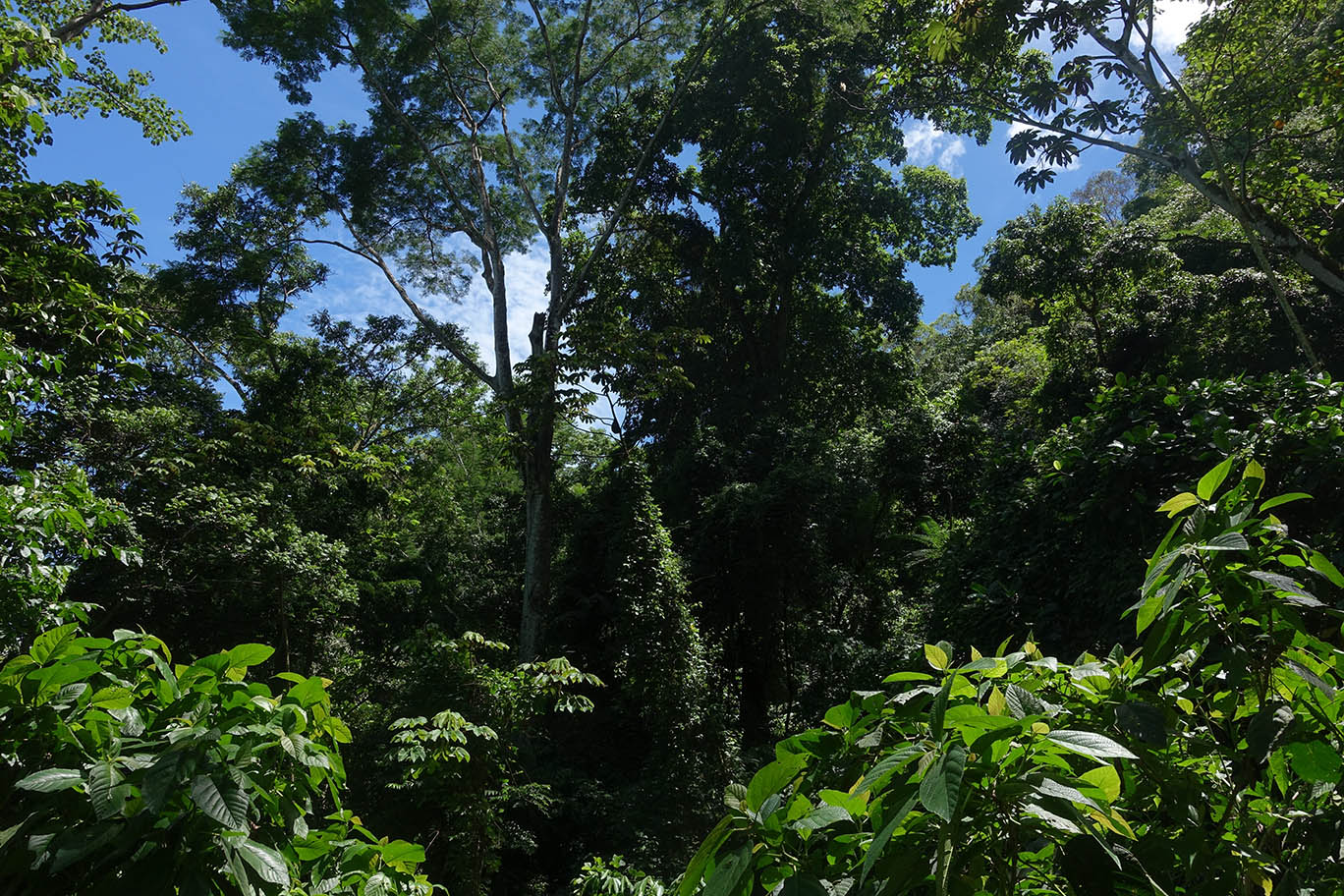Regenwald in Costa Rica