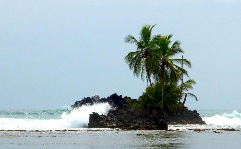 Panama: Palme auf Insel