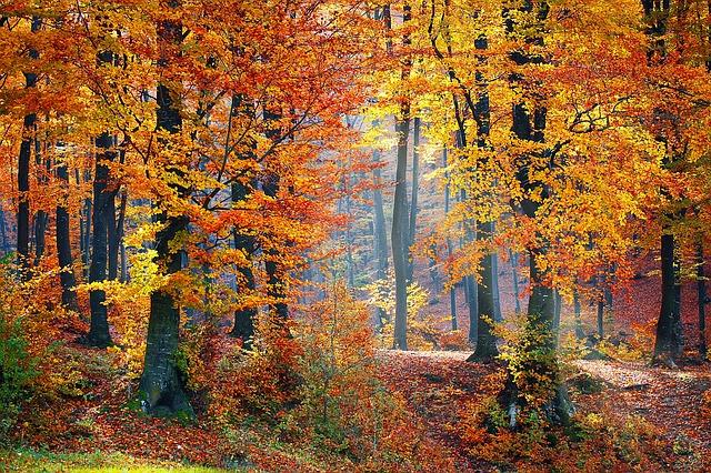 Drei deutsche Lieder zum Thema Herbst ⋆ Alma Blog